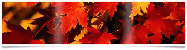 Fall Wine Tips