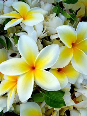 Yelow Flowers