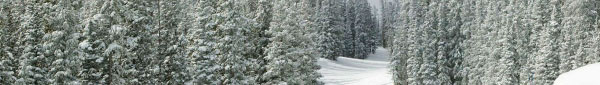 banner snowy forest