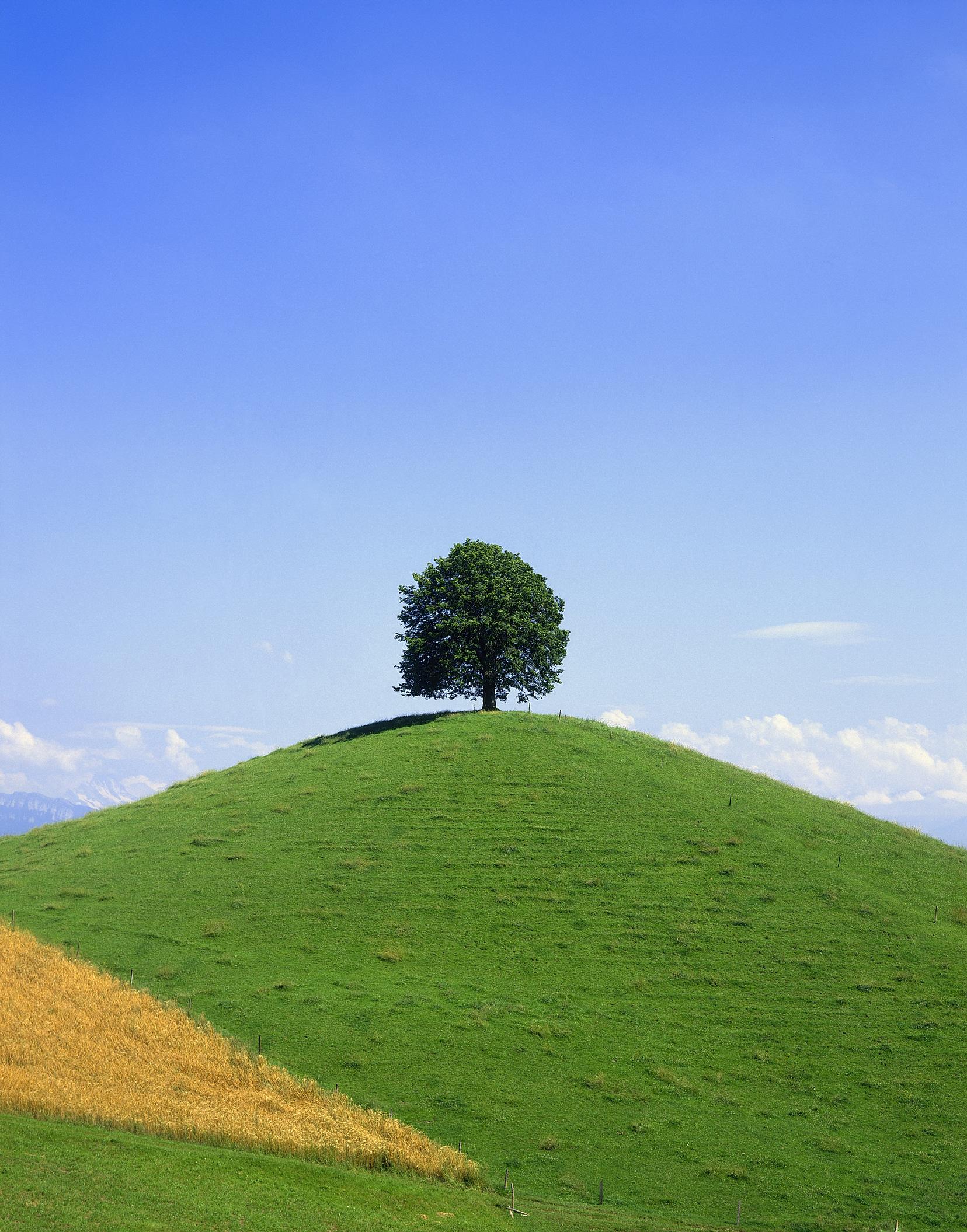 tree sky