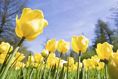 Spring picyure